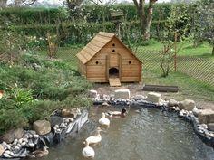 Duck Pond House realistic duck area Source: website duck houses ponds duck house prickend pond Source: website home improvements loan. Backyard Ducks, Backyard Farming, Chickens Backyard, Fun Backyard, Raising Ducks, Raising Chickens, Canard Coop, Duck House Plans, Duck Pens