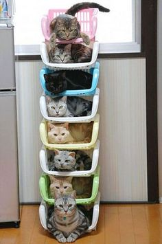 Stackable kitties !  This is the life I want when I am old...lots of kitties!