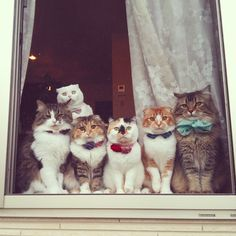 "* * WHITE CAT IN BACK: "" Don'ts sit in de window lookin' likes foolz wif dem bowties !! """