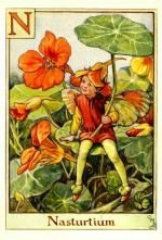 Nasturtium Flower Fairy Vintage Print by Cicely Mary Barker