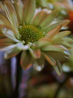 Flower photo by Kalee Espitia