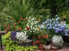Google Image Result for http://www.beginner-gardening.com/images/colorful-containers-36722.jpg