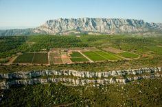 La vigne en Provence
