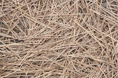 Tips On Using Pine Straw For Garden Mulch used when I lived in Florida was great