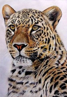 leopard painting for sale – How to Draw and Paint Animals – Wildlife Art Videos, Pastel pencil and oil painting Lessons Wildlife Paintings, Wildlife Art, Animal Paintings, Animal Drawings, Big Cats Art, Cat Art, Beautiful Cats, Animals Beautiful, Wild Animal Wallpaper