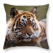 Royal Bengal Tiger Throw Pillow by Manjot Singh Sachdeva