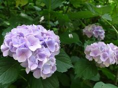 鎌倉の東慶寺|Blue Bajou のブログ