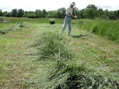 How to Make Hay with a Scythe. www.OneScytheRevolution.com - I kept the mowing segments very short, since there are other videos on that. I focused more on the tedding and turning of the hay, to give a real-time sense of the amount of work involved with that aspect of haying.  The timing didn't work out, to show how to set up the pyramid haystack frame. Hopefully next summer. In the meantime for more info on haystacks see my blog at http://www.onescytherevolution.com/1/...