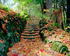 Steps full of cooper colored leaves - autumn season - HD Desktop/Mobile Wallpaper