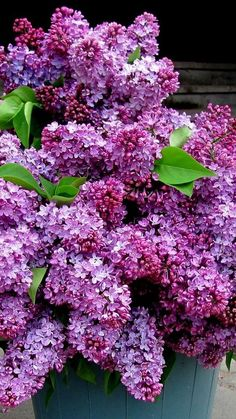 Beautiful lilacs...I can almost smell them!