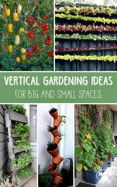 If you are not sure that you have the space to do traditional gardening, take your thinking up! GO VERTICAL! Here are some ideas for big and small spaces!