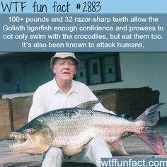 The Goliath tigerfish - WTF fun facts
