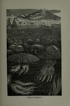 The water world; - Biodiversity Heritage Library