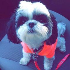 Chloe Mae is so cute ah she just so cute ❤️❤️☺️oh my gosh she so cute who doesn't love Alisha dog  go follow Alisha Maria @AlishaMarieReal let get Alisha to 1,5k by may we can do it guys