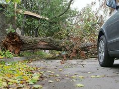 There might be several emergencies due to the trees as it might cause a lot of problems at your house or any other area. If there are tree branches growing near a power line, then you might have to get it removed. By taking the help of experts you can get Emergency Tree Removal, Tree Removal Service, Stump Removal, Tree Surgeons, Tree Felling, Safety Precautions, Tree Pruning, Types Of Work, Tree Care