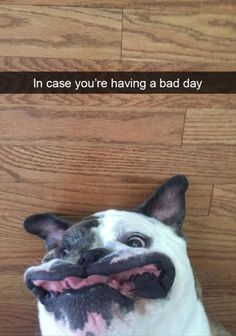 Funny+Animal+Pictures+Of+The+Day+–+25+Pics