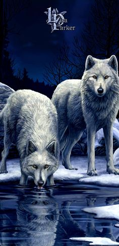 Wolf Wallpaper, Stuffed Animal Patterns, Wallpapers, Iphone, Animals, Art, Wolves, Art Background, Animales