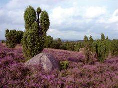 die Nemitzer Heide im Wendland ist immer einen Ausflug wert