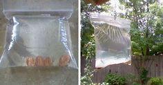 Voilà une astuce naturelle, fait-maison pour se débarrasser des mouches… Elle est vraiment efficace