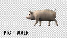 Pig Walk