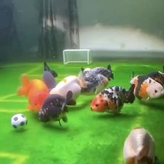 Successful Aquarium - Home to happier fish Cute Little Animals, Cute Funny Animals, Beautiful Fish, Animals Beautiful, Happy Animals, Animals And Pets, Fish Tank Themes, Cool Fish Tanks, Small Fish Tanks