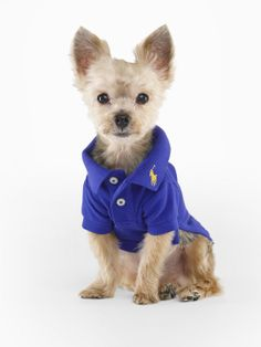 Sapphire star - Classic Dog Polo - For the Pet   Home - RalphLauren.com  Dress your pup in style with this classic polo, which is crafted from soft cotton mesh and mercerized to give it added luster. Two-button placket. Ribbed polo collar. Short sleeves. Ribbed armbands. Uneven vented hem. Our signature embroidered pony accents the collar. Discreet leash hole at the back of the neck, except for size XL. 100% cotton. Machine washable. Imported.