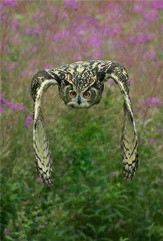 hibou-grand-duc à la chasse