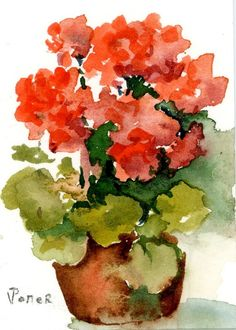 Geraniums water color painting