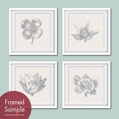Botanical Flower Bud Prints Series A Set of 4 12x12 by pixiepixels, $47.85