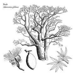 Le Baobab, Baobab Tree, Bonsai, Embroidery Patterns, Jasper, Tattoo Ideas, Moose Art, Girly, Trees