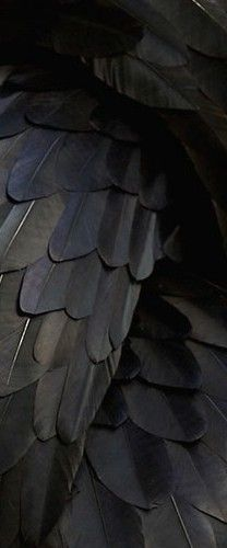 Black | 黒 | Kuro | Nero | Noir | Preto | Ebony | Sable | Onyx | Charcoal | Obsidian | Jet | Raven | Color | Texture | Pattern | Styling | Feathers
