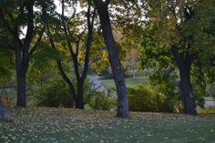 Arboretum Hatanpää