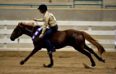 Wallace Wins Extreme Mustang Makeover And A Friend For Life | The Chronicle of the Horse.. AMAZING story... must read!