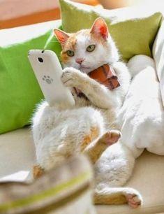 ❤️LOL ~ I'm Checking in Again Cat memes - kitty cat humor funny joke gato chat captions feline laugh photo I Love Cats, Crazy Cats, Cool Cats, Funny Cats, Funny Animals, Cute Animals, Animals Images, Baby Animals, Funny Jokes