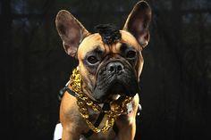 Parade in New York: Wenn Hunde Halloween feiern