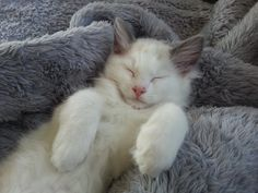 I'm so cute and charming little kitten Hermes. Have nice day!