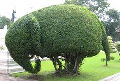 Artesanais & Cia: Topiaria na Jardinagem!!!