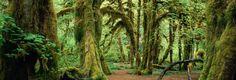 Hoh Rain Forest  https://roadtrippers.com/places/hoh-rain-forest-port-angeles/51a525be7f3d772cd2002703?mode=explore