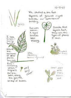 nature sketching for nature journal