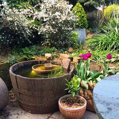 How to make a mini wildlife pond