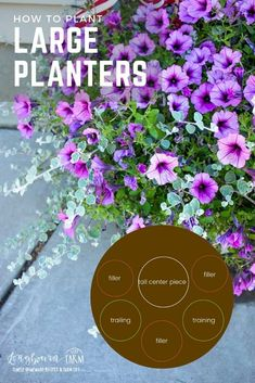 Planting large planters can feel intimidating. You want them to be big and beautiful and make an impact. Picking the right flowers is actually really easy! Grass Drawing, Backyard Landscaping, Landscaping Ideas, Potato Vines, Purple Sweet Potatoes, Barrel Planter, Animal Nutrition, Large Planters, Complimentary Colors