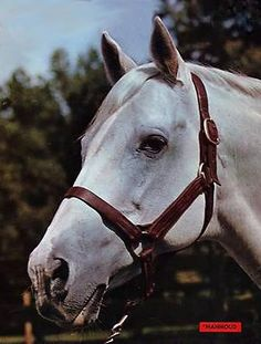 picture of horse Mahmoud Horse Tack, Horse Racing, Race Horses, Epsom Derby, Sport Of Kings, Thoroughbred Horse, Horse Pictures, Show Horses, Courses