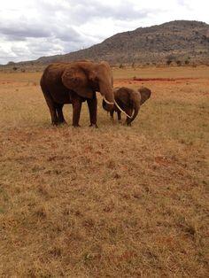 Elephant in Tsavo Est Park