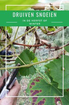 Garden Plants, House Plants, Go Outside, Garden Planning, Ecology, Gardening Tips, Lush, Plant Leaves, Flora