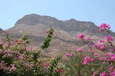Negev - the desert blooms