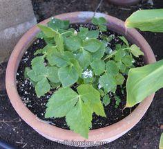 Food grade diatomaceous earth makes an excellent non toxic pesticide in the garden.