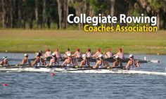 Eleven SSC Rowers Named CRCA National Scholar-Athlete | Sunshine State Conference Sunshine State, Rowing, Conference, Coaching, Athlete, Names, Swimming, Swim, Canoeing