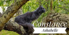 Maine Coon, Panther, Kangaroo, Animals, Cat Breeds, Baby Bjorn, Animales, Animaux, Panthers