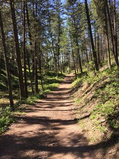 Hiking Knox Mountain in Kelowna, British Columbia Best Hikes, Boating, British Columbia, Wander, Babe, Bucket, Hiking, Mountain, Country Roads