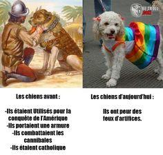 Les chiens d'avant et de maintenant... - Be-troll - vidéos humour, actualité insolite